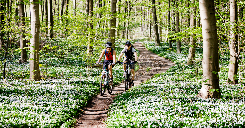 two cyclists on a bike trail